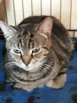 Kochane kociaki szukają domu. Wszystkie po przejściach. Potrzebują miłości