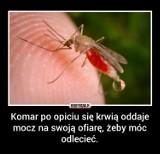 Dzień Komara: 12 faktów o uciążliwych owadach [ZDJĘCIA]