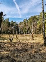 Gm. Obrzycko. Lasy kobylnickie skrywają wiele historii, ale są też pełne uroku!