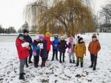 Śnieżna zima w Oleśnicy. Są sanki, bałwany i bitwy na śnieżki
