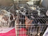 """80 psów w klatkach w lesie pod Cottbus. Odpowiedzialna właścicielka """"fabryki zwierząt"""" w Stargardzie Gubińskim?"""