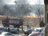 Pożar w Leszczynach. Płonęła trawa [ZDJĘCIA]