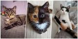 Dzień Kota. Oleśniczanie pochwalili się swoimi pięknymi kociakami