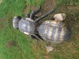 Gm. Pszczółki. Co się stało ze skrzydłami pszczoły w Parku Brzozowym? Symbol gminy padł ofiarą wandali