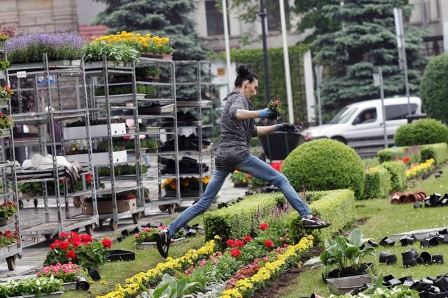Zobacz, co teraz sadzi się w ogrodach i ile trzeba zapłacić za sadzonki w Jaśle ----->