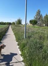 Malbork. Łąki zamiast trawników budzą emocje mieszkańców. Władze muszą tłumaczyć się z niekoszonych zieleńców