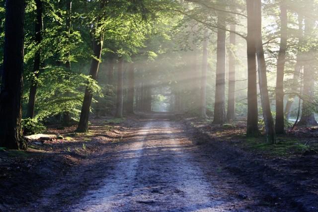 Dbajmy o bezpieczeństwo podczas wyprawy do lasu.
