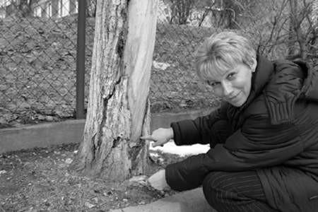 Jolanta Uzdowska pokazuje bardzo już zniszczone drzewo przed Przedszkolem Miejskim nr 13.