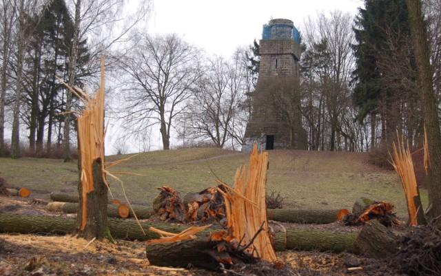 Wycinka drzew przed wieżą Bismarcka w Szczecinku