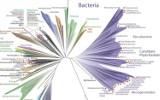 """Naukowcy opublikowali najnowszą wersję """"drzewa życia"""""""