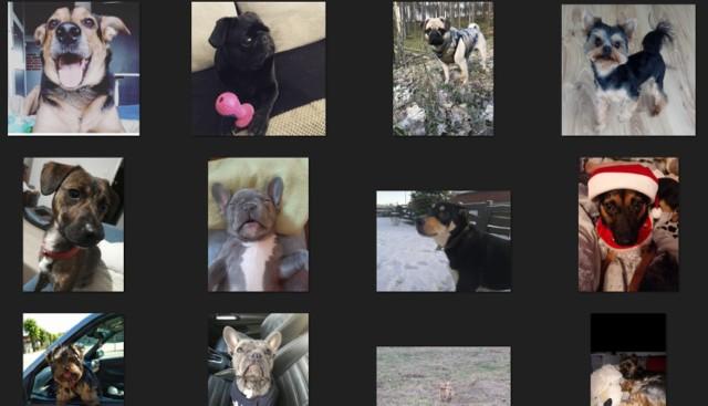 Najcudniejsze psy z powiatu bytowskiego mają szansę zostać gwiazdami kalendarza na 2021 rok. Który z nich trafi na okładkę?