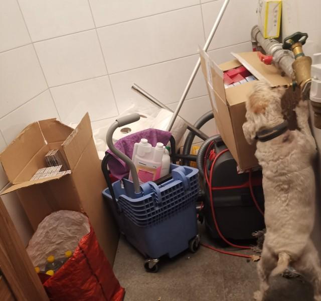 Funkcjonariusze kujawsko-pomorskiej Krajowej Administracji Skarbowej znaleźli nielegalne papierosy i alkohol. Pomógł pies służbowy Kolia