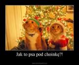 Memy na Boże Narodzenie. Najlepsze śmieszne obrazki i zdjęcia na święta