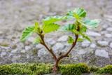 """""""Jedno dziecko - jedno drzewo"""". Trwa akcja Nadleśnictwa Kwidzyn i urzędu miasta. Na czym polega?"""