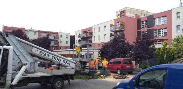 Prace związane z wycinką drzewa zaczęto  przed godz. 9.