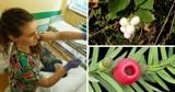 To są trujące rośliny - UWAGA! Na Śląsku dzieci trafiły do szpitala po ich zjedzeniu. Lekarze ostrzegają