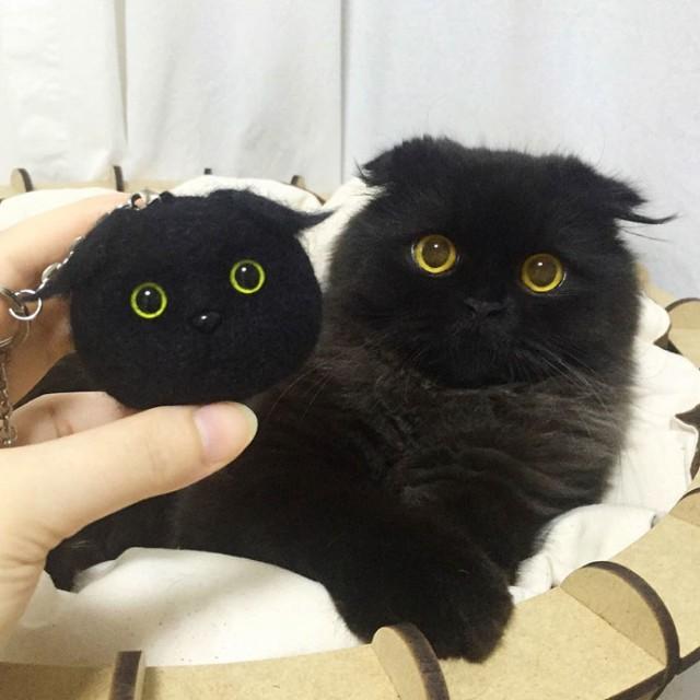 Ta przerażona futrzasta kulka to najpiękniejszy kot na świecie. Mamy dowody!
