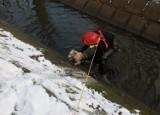 Pożary samochodów, groźny tlenek węgla i uratowany pies. Tydzień strażaków w Zduńskiej Woli