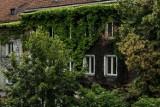 Krakowskie budynki mają mieć zielone ściany. Majchrowski: nie ma na to pieniędzy