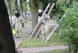 Strażacy 185 razy walczyli z owadami błonkoskrzydłymi [ZDJĘCIA]