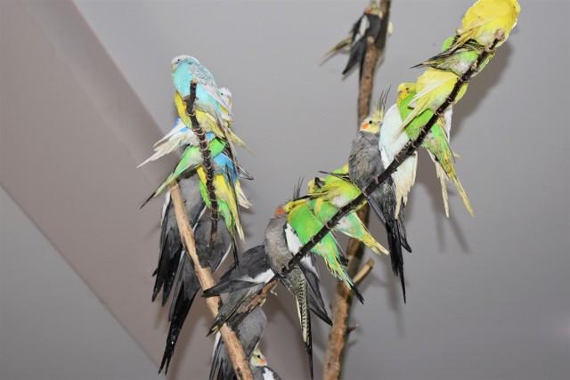 W Nowej Soli, ani najbliższej okolicy takiego miejsca nie ma. A z racji tego, że Park Krasnala od lat cieszy się niesłabnącym zainteresowaniem rodzin z dziećmi, pewnie i papugarnia będzie często odwiedzana. Tyle, że to nie jest zwykła papugarnia.
