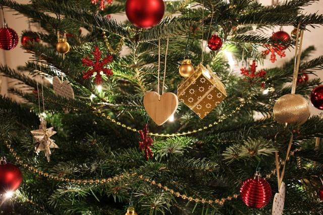 Żywa choinka nie musi wylądować w koszu od razu po Świętach. Możemy pielęgnować ją w pojemniku albo zasadzić w ogrodzie.
