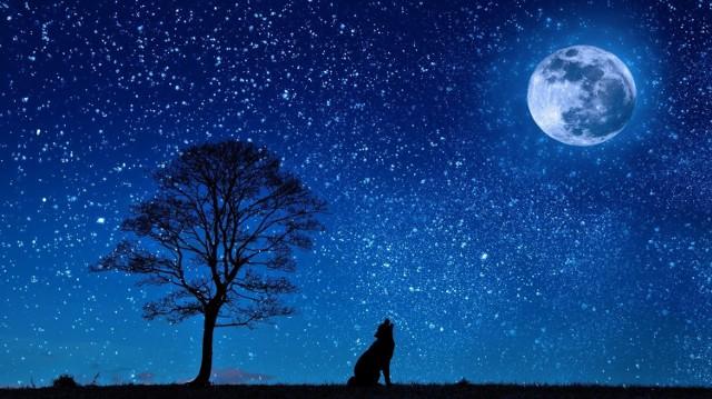 Zwierzęta mogą urodzić się pod szczęśliwą gwiazdą i posiadają swoje znaki Zodiaku! Sprawdźcie dokładnie kiedy urodził się wasz pupil i poznajcie jego cechy osobowości!