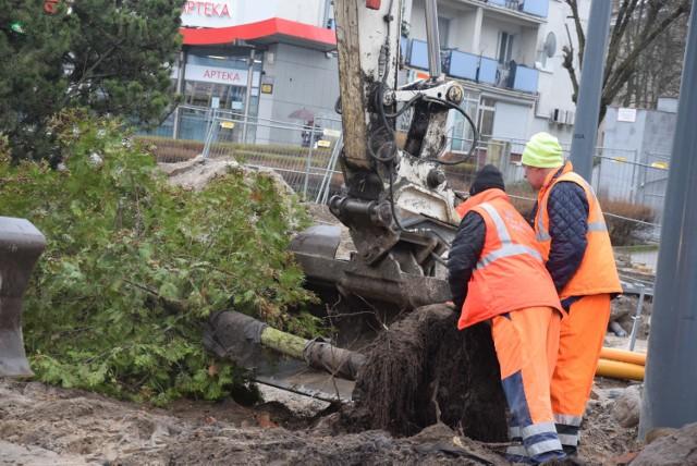 Akcja przesadzania drzew odbyła się w poniedziałek 9 marca.