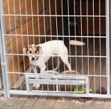Smutny powakacyjny bilans w Schronisku dla Zwierząt w Ostrowie Wielkopolskim