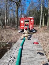 Wągrowiec. Strażacy prowadzili działania w lesie pod Wągrowcem. Szkolili się m.in. z dojazdu na miejsce zdarzenia znajdującego się w lesie