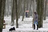 Pogoda w Toruniu. Zobacz czy zima zaskoczy nas pod koniec tygodnia