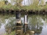 Niski stan wody w Wisłoku i Lubatówce. Zobaczcie zdjęcia