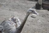 Zwierzęta czekają przy Wspólnocie Betlejem. W tym roku nie ma Bacówki w Parku Gródek ZDJĘCIA