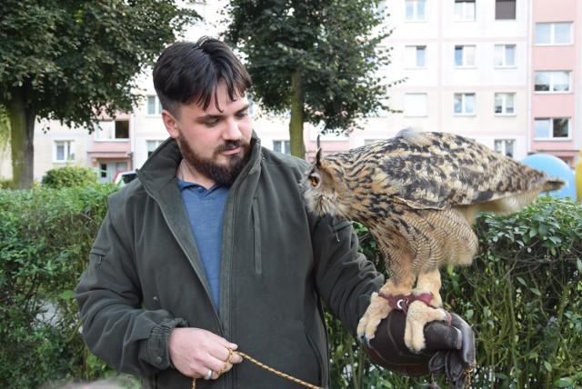 Sokolnik Mateusz Moszczyński z pomocą swoich podopiecznych walczy ze szpakami