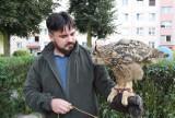 Ptasi problem na Kalińcu. Mieszkańców nękają szpacze hordy