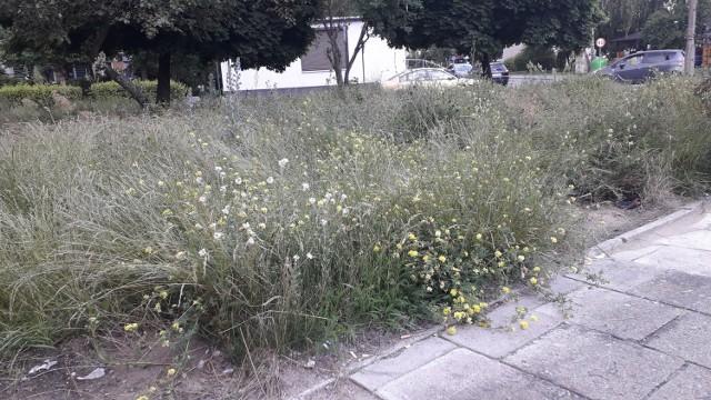 """""""Miejskie łąki"""" w Brodnicy. Podobają się wam takie miejsca?"""