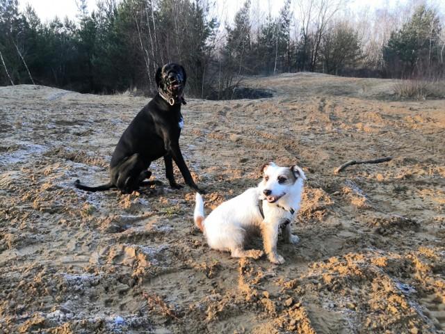 Psy uratowały starszego pana, który zbierał gałęzie na opał