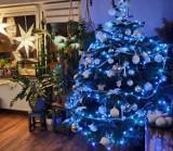 Boże Narodzenie 2020, Piotrków: choinki piotrkowian i mieszkańców powiatu. Czytelnicy pokazali swoje świąteczne drzewka [ZDJĘCIA]