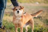 Pieski ze schroniska w Boguchwale szukają domu. Może je przygarniesz? [ZDJĘCIA]