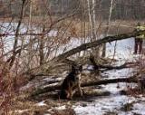Wyszedł z psem na spacer i go zostawił. Przywiązał kundelka do drzewa. Pieska znalazła go mieszkanka Świętochłowic