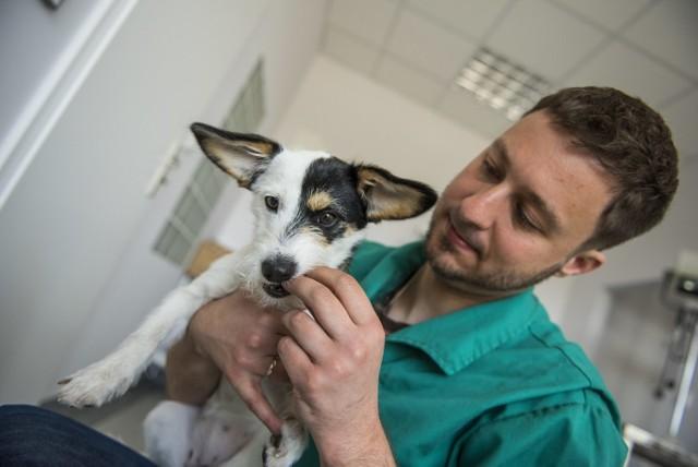 Na sterylizację psów i kotów przeznaczono 300 tys. zł, w ramach budżetu obywatelskiego