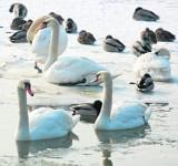 Dokarmiać zimą ptaki? Opinie są nadal podzielone
