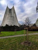 Kaliski Budżet Obywatelski. Nowe drzewa pojawiły się na osiedlu Asnyka w Kaliszu ZDJĘCIA
