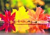 Co rośnie w Giszowcu, gdy lecą jesienne liście?