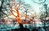 Jedenaście drzew w finale