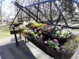 Wiosna w świnoujskim parku. Fortepian Chopina już pełen bratków