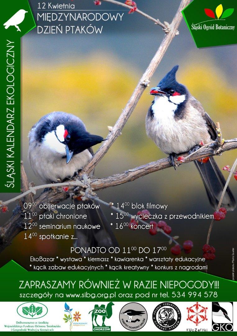 Międzynarodowy Dzień Ptaków W Mikołowie Będzie Gra Terenowa