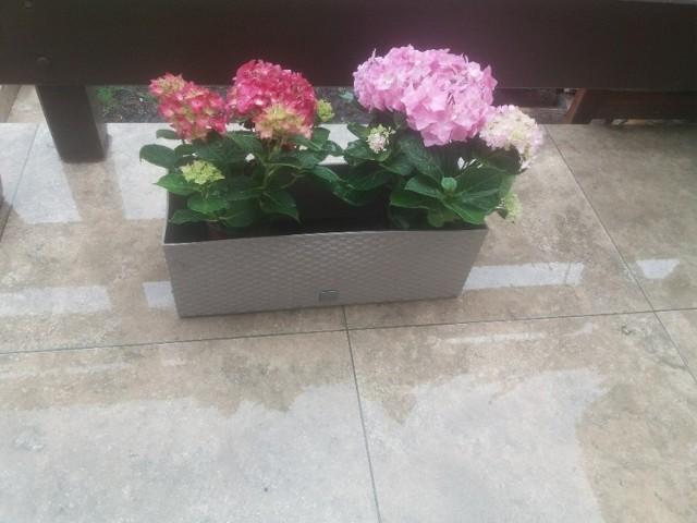 temperatura spadnie poniżej zera. Wiosenne kwiatki moga ucierpieć.