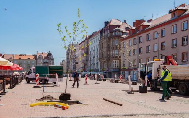 Rozpoczęła się rewitalizacja zieleni na Rynku w Bytomiu. Zobacz kolejne zdjęcia. Przesuwaj zdjęcia w prawo - naciśnij strzałkę lub przycisk NASTĘPNE >>>