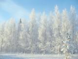 Jaka będzie zima? Mroźna czy łagodna? Zobacz prognozy na zimę 2020/2021